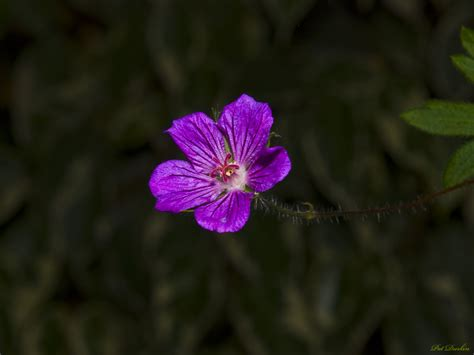 Pink Small Flowers small pink flower gardenbanter co uk