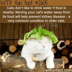 How To Make Cat S Claw Drink For Detox by Ten Amazing Facts About Animals Facts Interesting