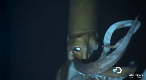 film giant squid video of the giant squid the blemish