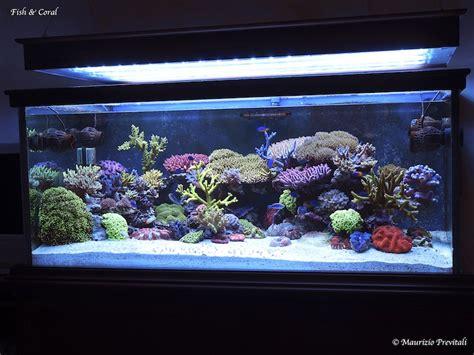 vasche per acquari marini guida all allestimento di un acquario marino tropicale 1
