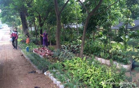Lu Hias Bandung berburu tanaman hias di cibungur 1