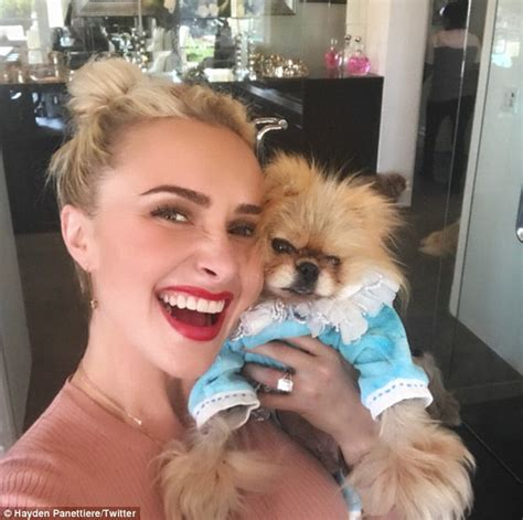 pomeranian rescue los angeles hayden panettiere greets giggy at vanderpump dogs in la daily mail