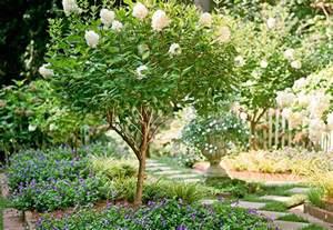 ornamental trees shrubs