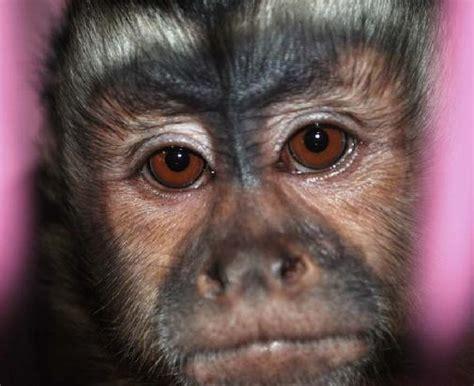 monkey heaven monkeykisses com