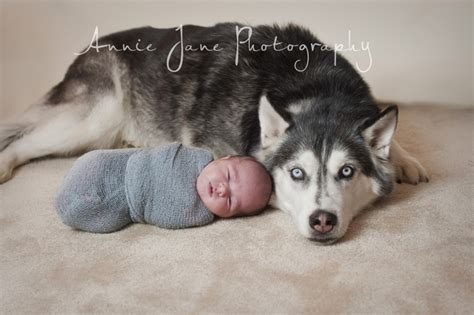 newborn husky puppies baby husky dogs www imgkid the image kid has it