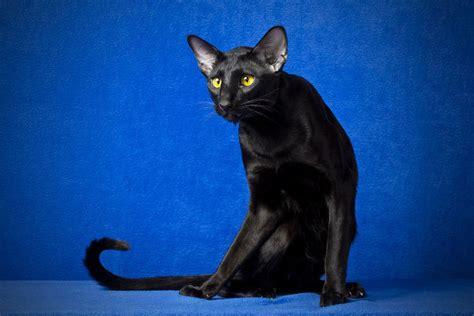 K Sq Black Cat Big Size black cat desktop background hd 1920x1280 deskbg