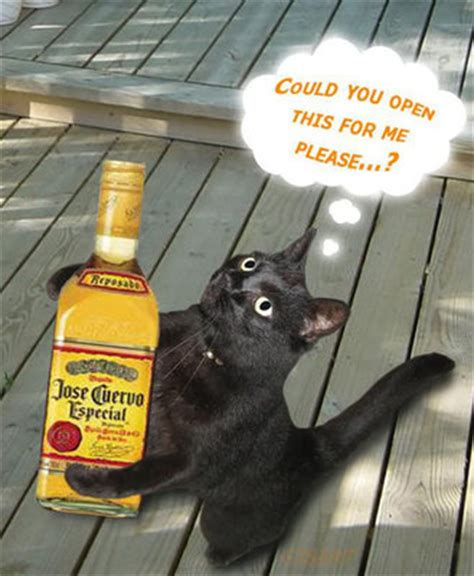 Jose Cuervo Meme - july 24th is national tequila day so here are the cat