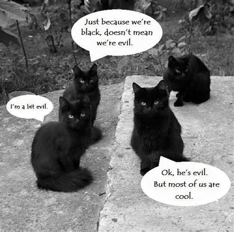 Funny Black Cat Memes - not all black cats are evil sort of meme humor