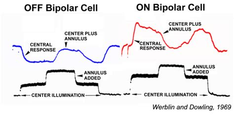grounded by bipolar disorder one pilot s landing books bipolar cell pathways in the vertebrate retina by ralph