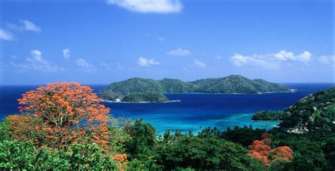 Find In And Tobago Sunday Coffee With Jeb Senior Citizen Travel