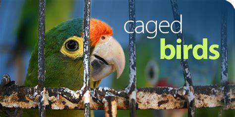 pappagallo in gabbia adoptdontshop adottare un animale 232 una scelta d
