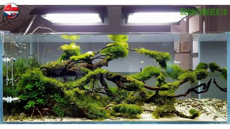 Aquascape Ada by Aquascape Ada Idea Studio Poland