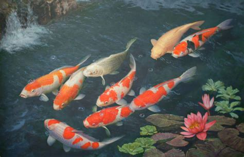live wallpaper for pc koi koi fish wallpapers wallpaper cave