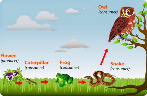 esempio di catena alimentare labordid by lisia nella prossima lezione di scienze focus