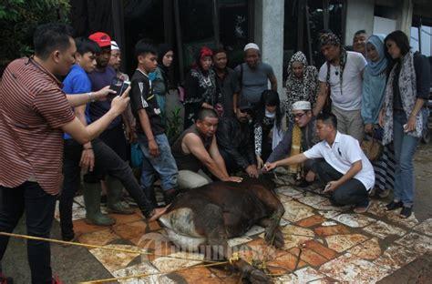 film anak hewan artis film pafindo memberi bantuan hewan qurban yayasan al