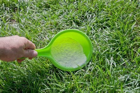 Natural Flea Tick Repellent For Yard Rocky Mountain Fleas In Backyard