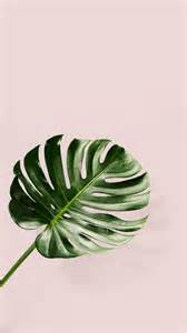 plant wallpaper 25 best iphone background pink ideas on