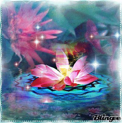 immagini fior di loto fiore di loto immagini animate da condividere 129008563