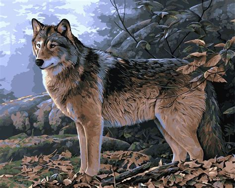 Harga Pac Painting gambar serigala liar pengiriman gratis diy lukisan cat