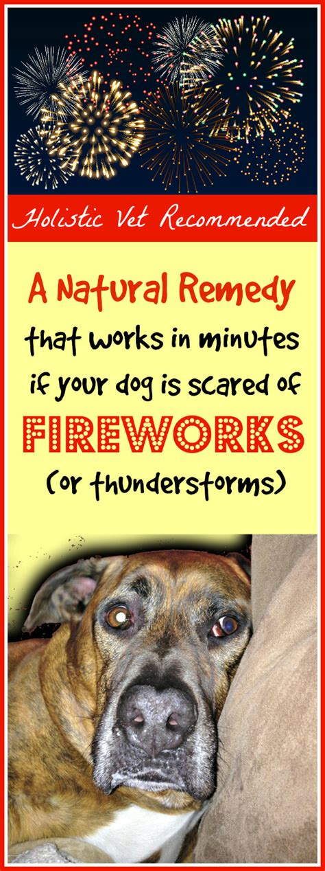 afraid of fireworks remedy if your is scared of fireworks or thunderstorms primally inspired