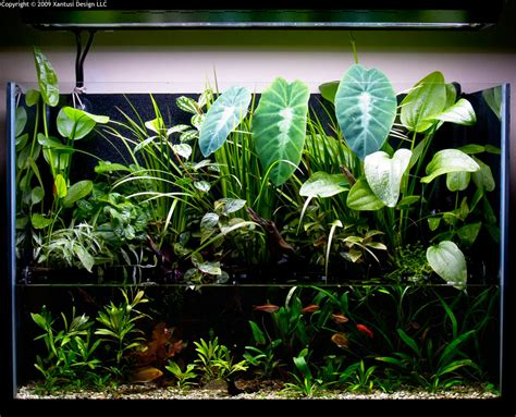 aquascape plants for sale riparium exle aquarium plant set ups pinterest