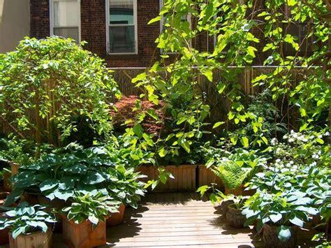 piante sempreverdi per terrazzi piante da terrazzo sempreverdi piante da terrazzo