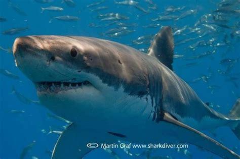 surfer attacked  shark  vandenberg air force base