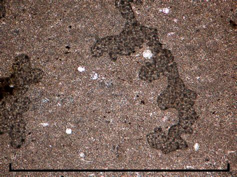 mudstone thin section cambridge rocks minerals fossils