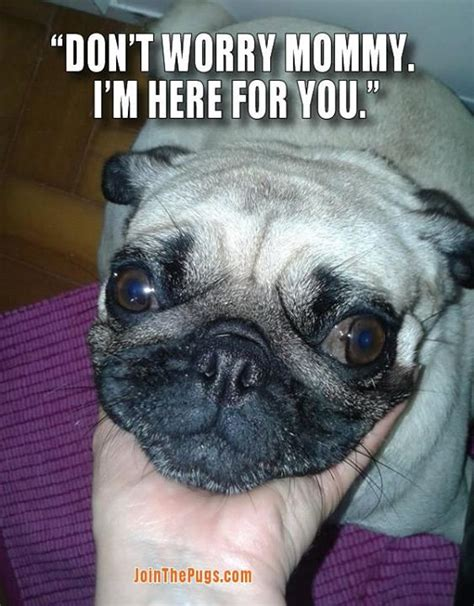 pugs care join the pugs gt pugs care
