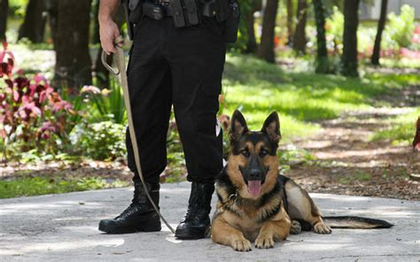 german commands for dogs k9 commands in german breeds picture