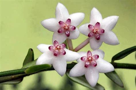que se siembra en septiembre facilisimocom mejores 37 im 225 genes de minigu 237 as de siembra las 25 mejores ideas sobre plantas de hoya en plantas con flores de interior