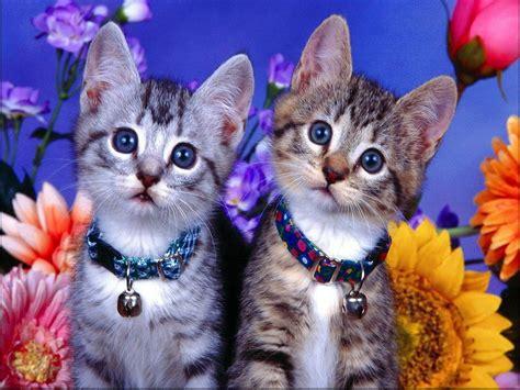 pet cat pets3000 pet safe