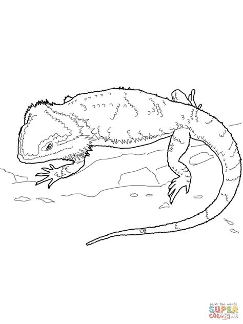 Coloring Page Bearded Dragon | bearded dragon coloring page free printable coloring pages