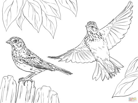 coloring page of house sparrow vesper sparrows coloring page free printable coloring pages