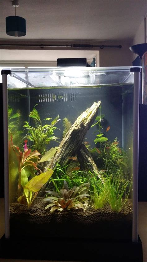 17 best images about nano tank aquascape on 7