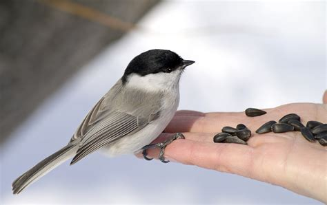 how to hand feed birds in your backyard