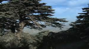 Low Country Homes cedar forests lead lebanon eco tourism boom cnn com