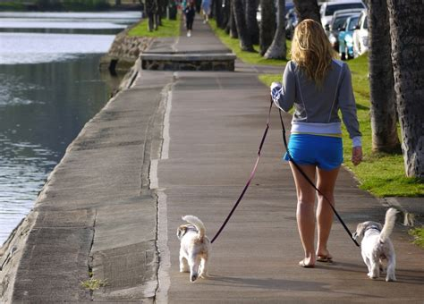 how to your puppy to walk on a leash walk your safely and enjoyably