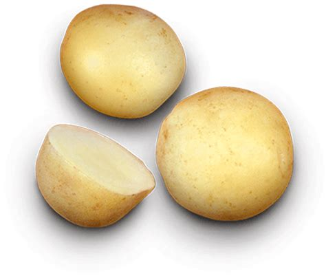 The Canadian Potato by Earthapples Seed Potatoes Canada