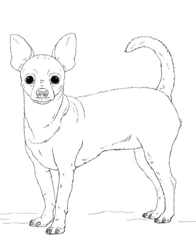 cute chihuahua coloring pages pom dog coloring pages coloring pages