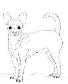 coloring page of chihuahua coloriage chihuahua coloriages 224 imprimer gratuits