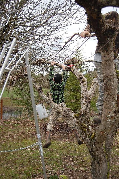 when to prune fruit trees fruit tree pruning on the banks of salt creek