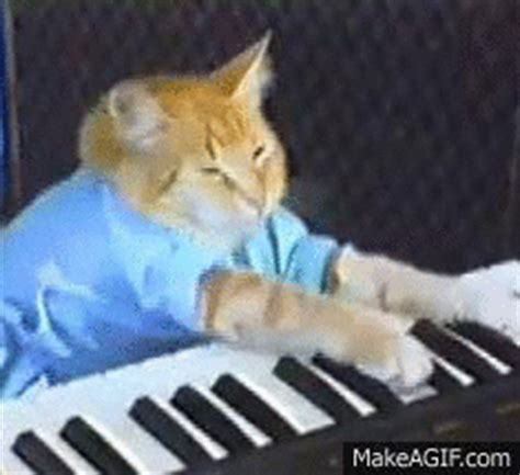 Cat Playing Piano Meme - keyboard cat gifs wifflegif