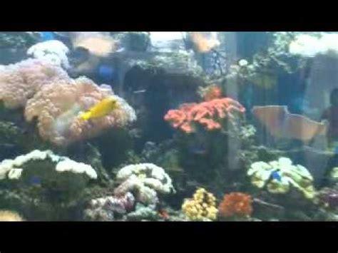 Batu Kerang Laut aquarium ikan laut dan batu karang yang cantik