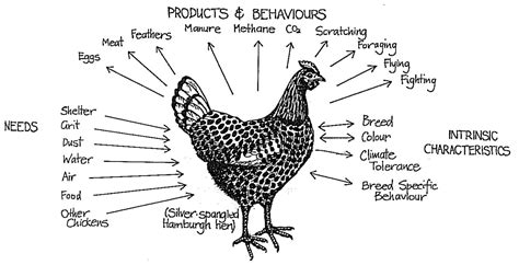 Backyard Chickens Chart Backyard Chickens Tara Designs