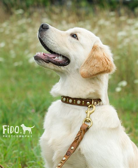 dog backyard leash fido photography dog collars and leashes fido photography