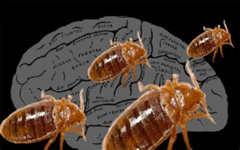 Ddt Bed Bugs ddt for bed bugs pesticide network