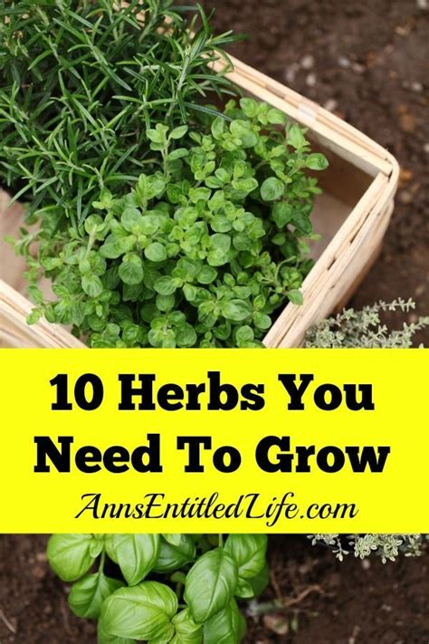 3 diy herb gardens you ll want to grow huffpost 22 best french country beach style images on pinterest