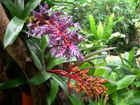 Plants In Tropical Rainforest - vegetation and animals tropical humid