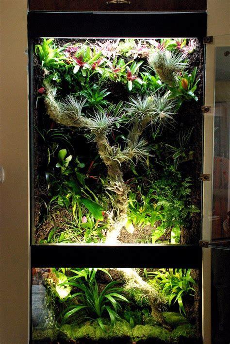 rainforest tank   lights sources terrariums